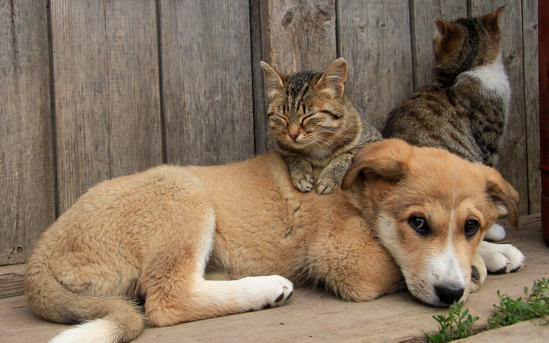 Free Cute Animal Wallpapers For Desktop Dog And Cat Wallpaper 53 Images