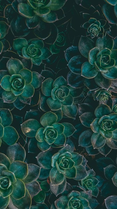 Succulent Wallpapers (51+ images)