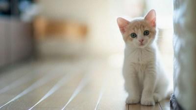 Kitten Wallpaper for Desktop (64+ images)