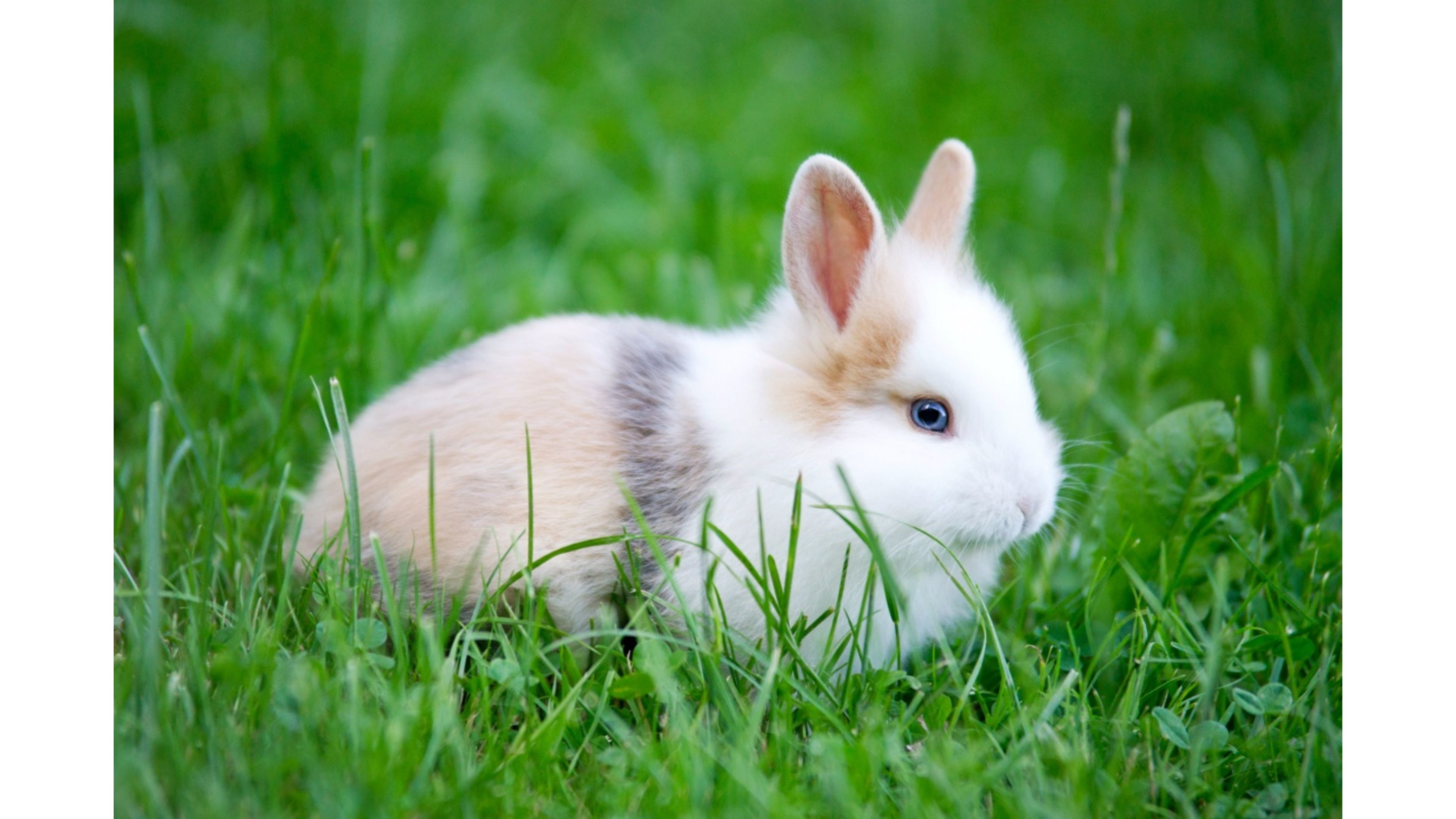 Cute White Baby Rabbits Wallpapers Wallpapers Of Rabbits 72 Images