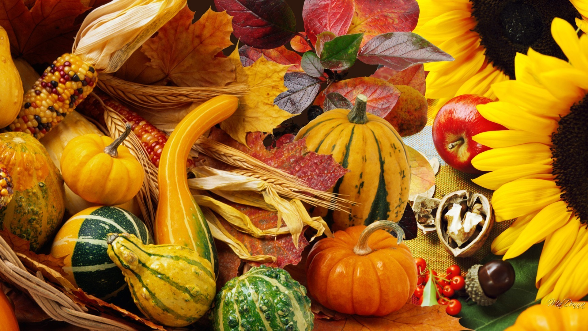 Fall Harvest Iphone Wallpaper Wallpaper Thanksgiving 72 Images