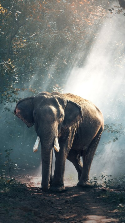 Elephant Screensavers and Wallpaper (69+ images)