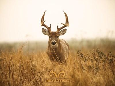 Big Whitetail Buck Wallpaper (56+ images)