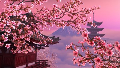 Japanese Cherry Blossom Wallpaper 1920x1080 (59+ images)