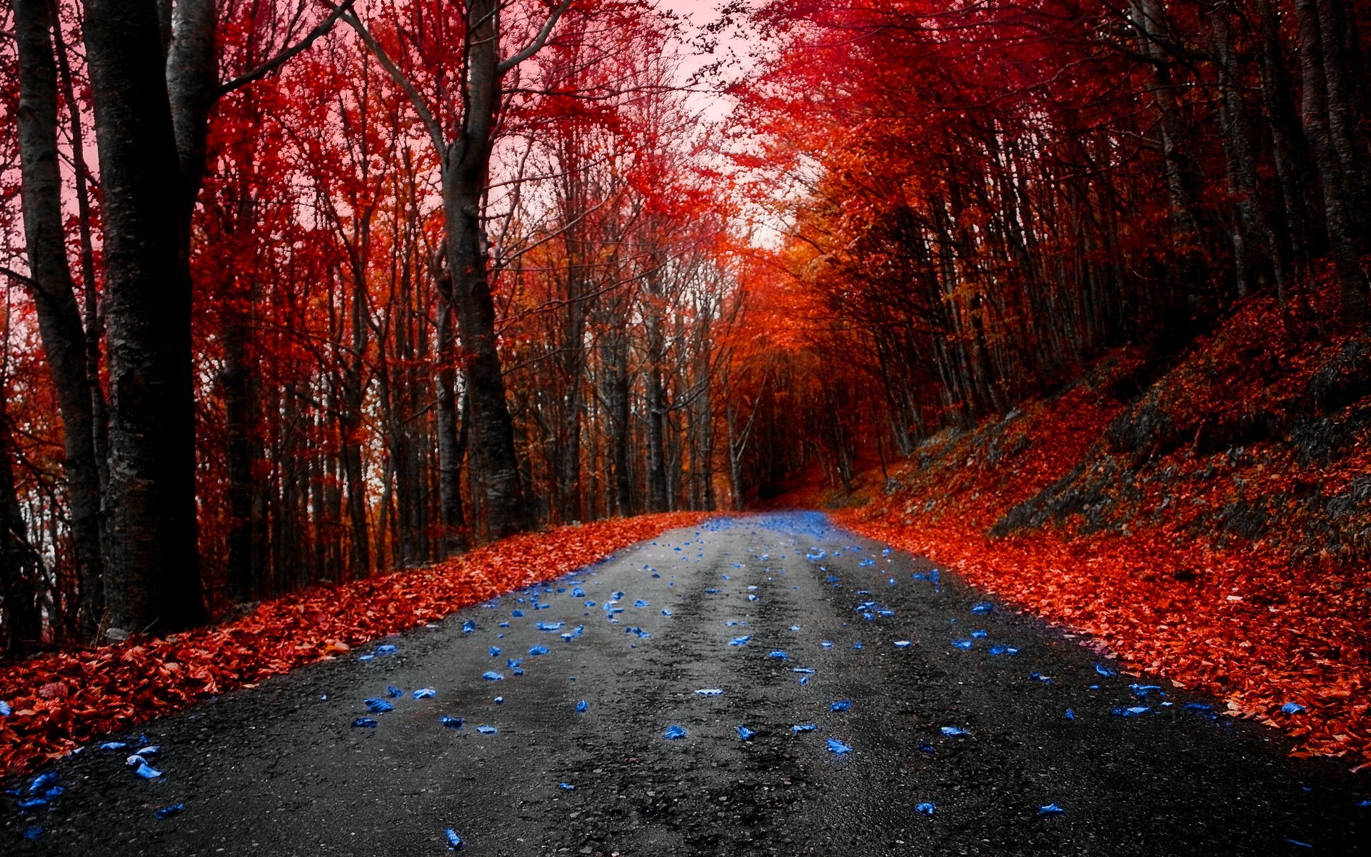 Fall Leaves Pathway Computer Wallpaper Red Nature Wallpaper 65 Images