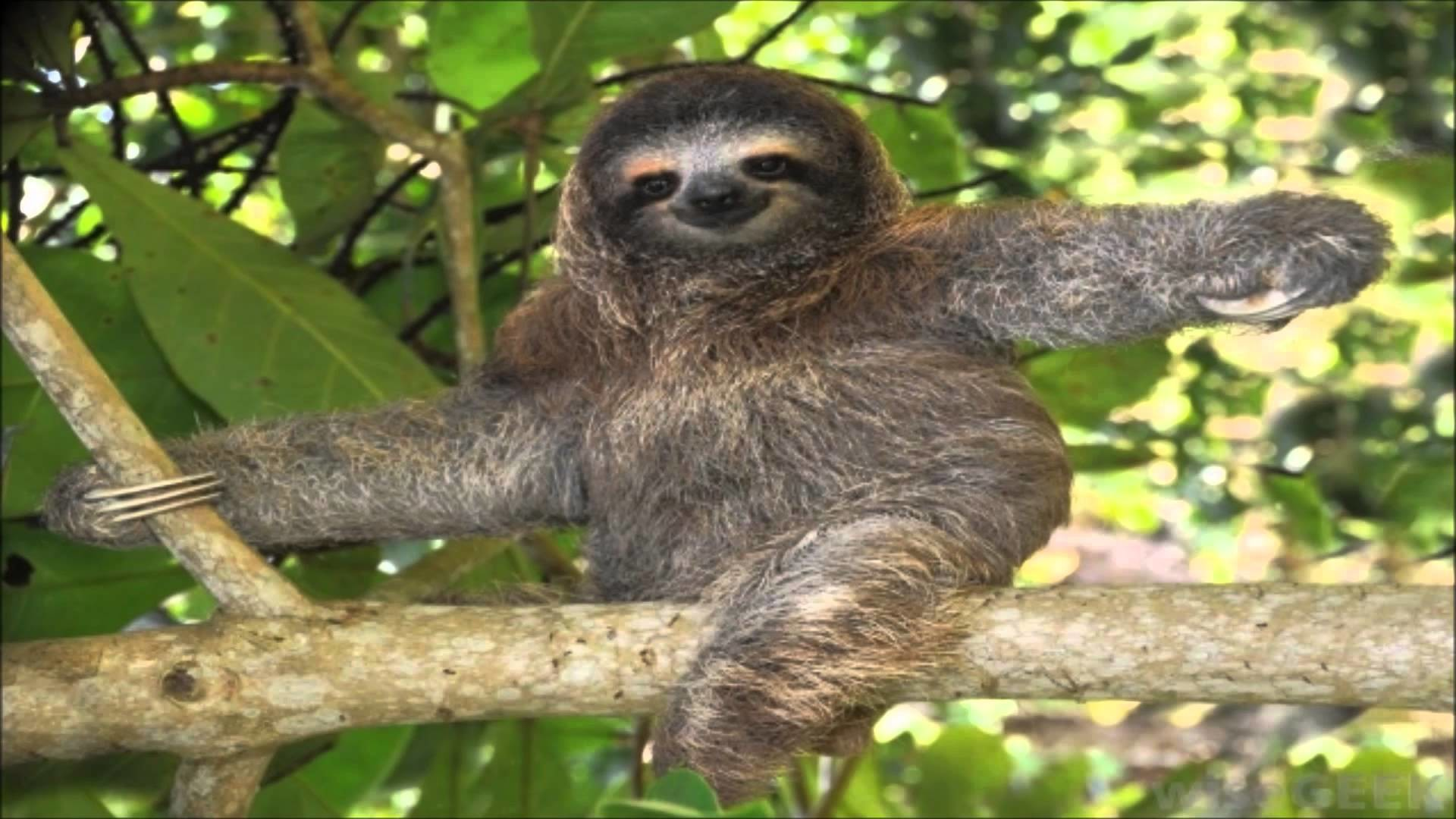 Pinterest Wallpaper Iphone Cute Cute Sloth Wallpaper 67 Images