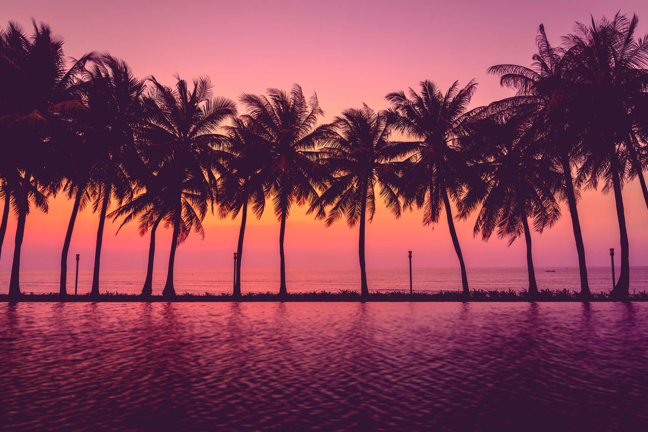 Palm Tree Wallpapers Palm Tree Wallpaper Desktop 69 Images