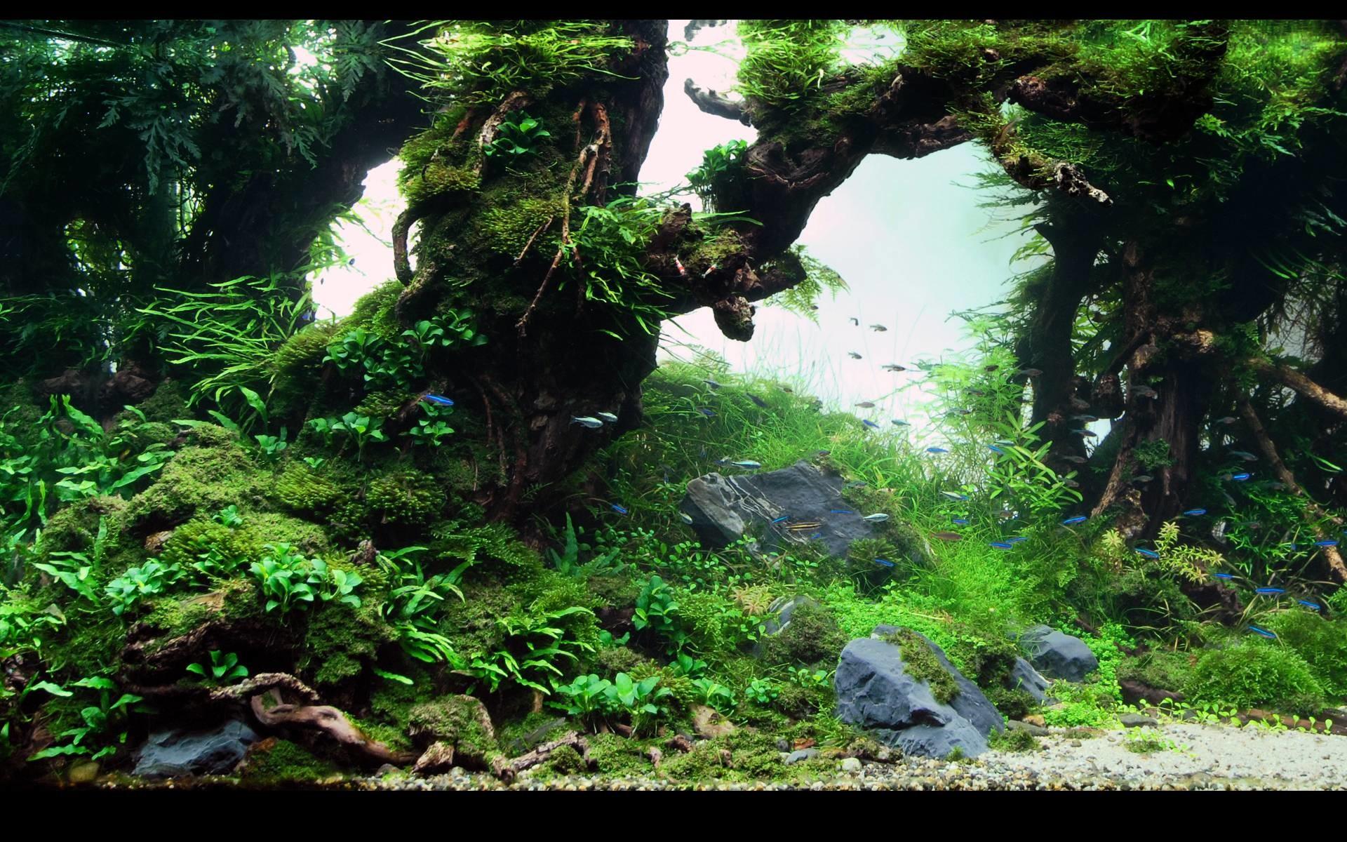 3d Fish Tank Wallpaper Aquatic Backgrounds 58 Images