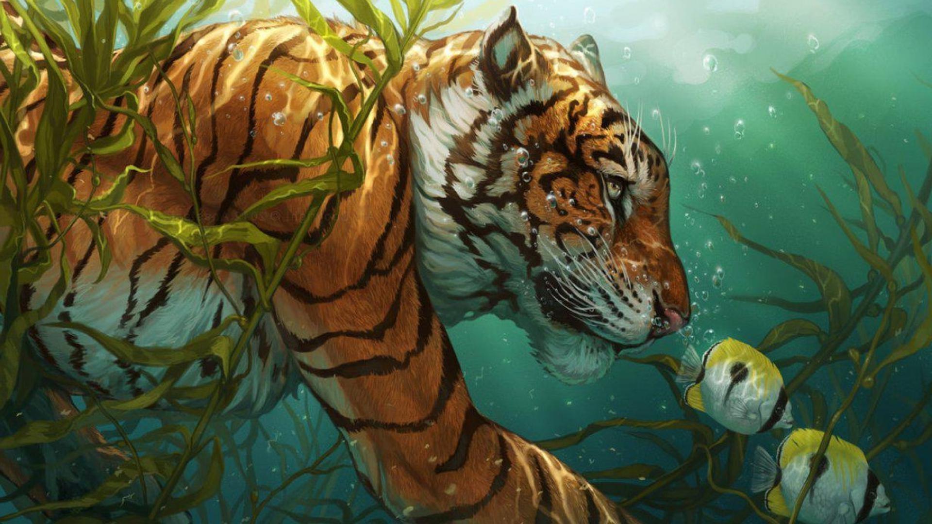 Tropical Ocean 3d Live Wallpaper Underwater Hd Wallpapers 1920x1080 79 Images