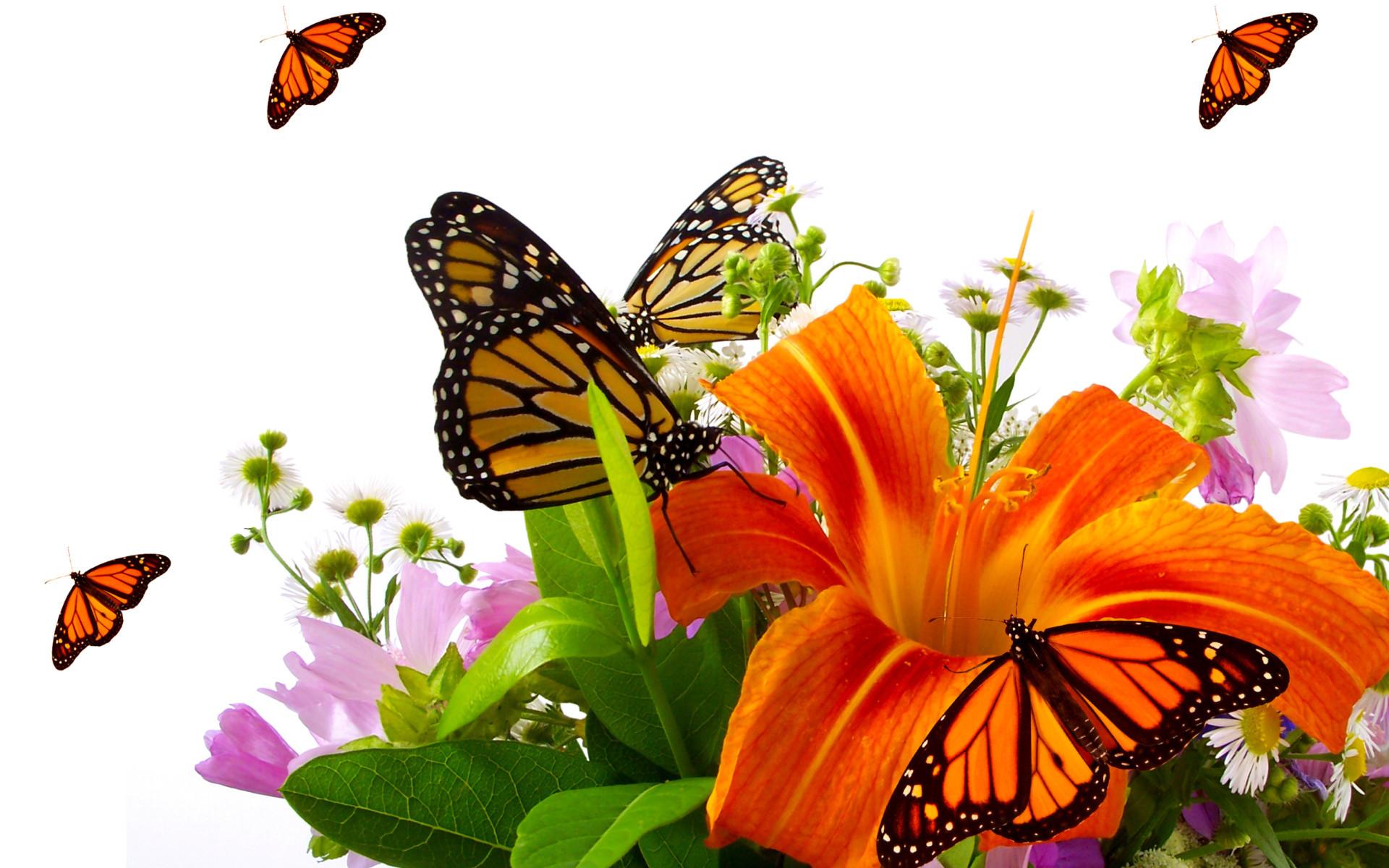 Butterfly 3d Live Wallpaper Free Download Descargar Wallpaper Para Computadoras Gratis 59 Images