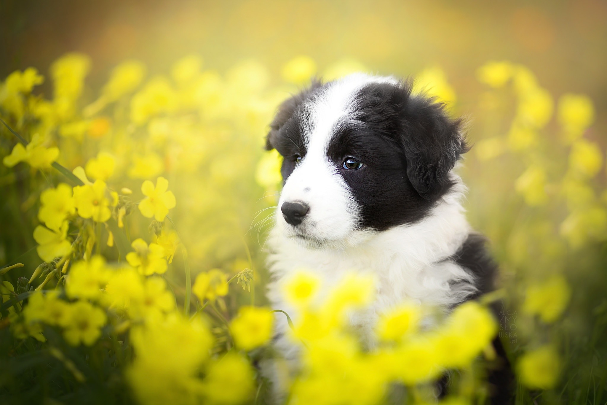 Cute Labrador Puppy Wallpaper Puppies And Flowers Wallpapers 63 Images