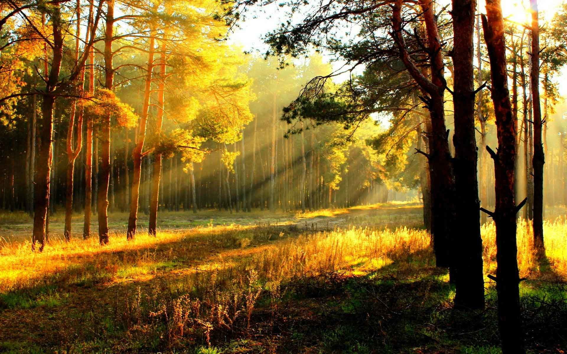 Fall Leaves Iphone 6 Plus Wallpaper Autumn Landscape Wallpaper 69 Images