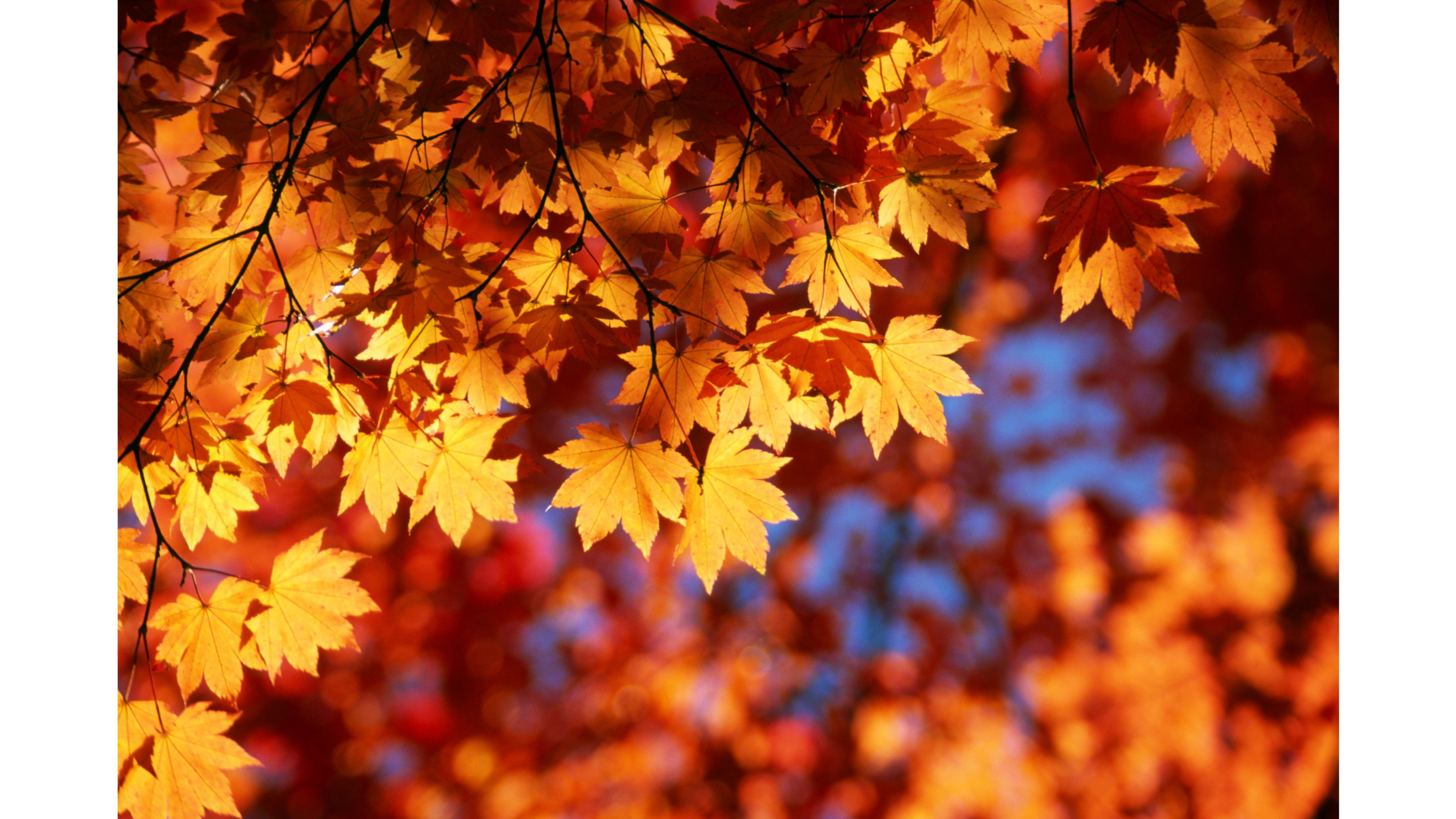 3d Falling Leaves Animated Wallpaper 3d Fall Wallpaper 61 Images
