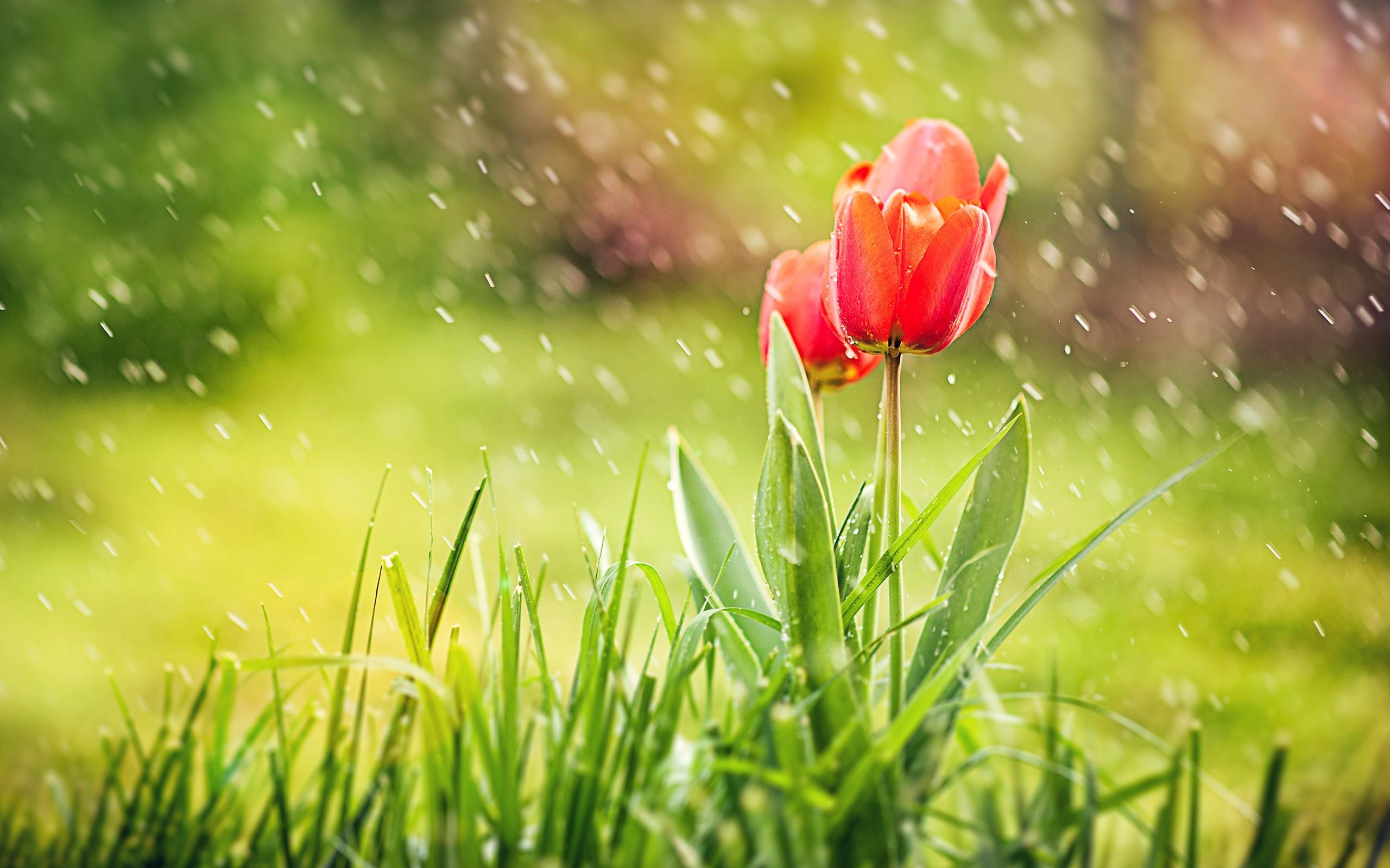 Raindrop Wallpaper Iphone X April Showers Wallpaper 56 Images