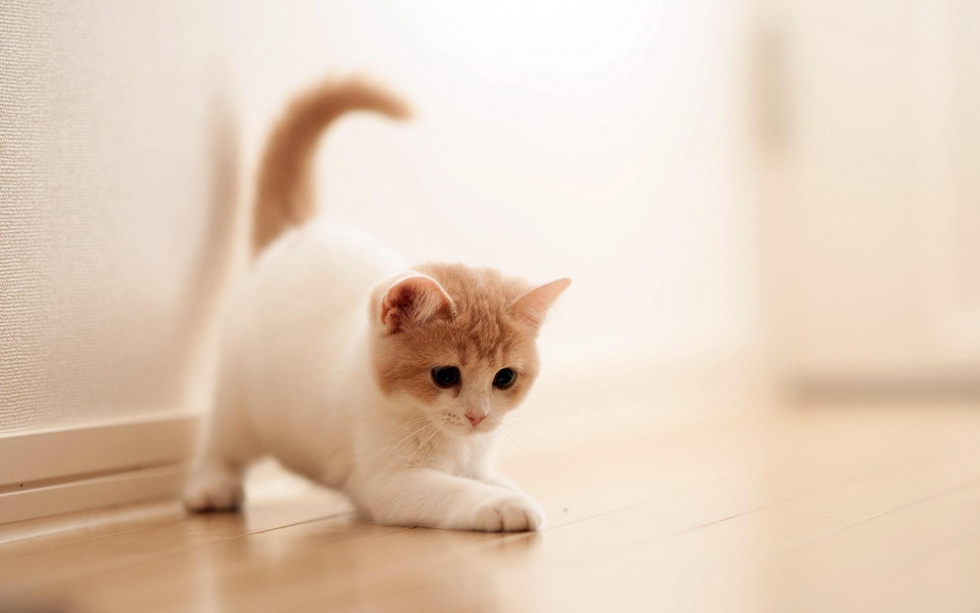 Moving Wallpapers For Iphone 7 Cute Cats Wallpaper 63 Images