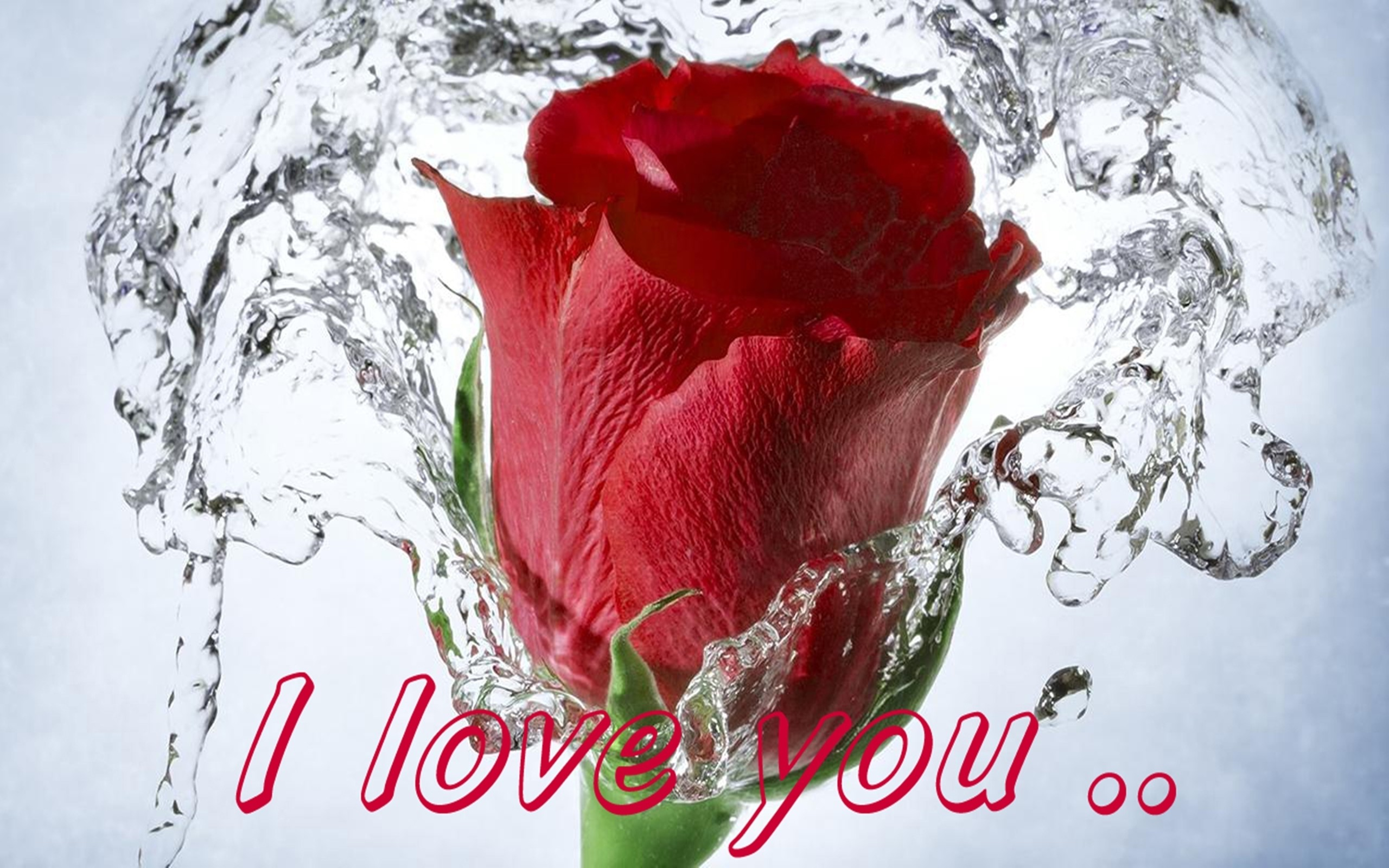 Cute Couple Hd Wallpapers With Quotes In Hindi Red Rose Love Wallpaper 55 Images