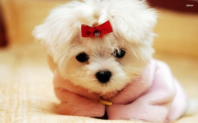 Wallpapers of Cute Puppies (57+ images)