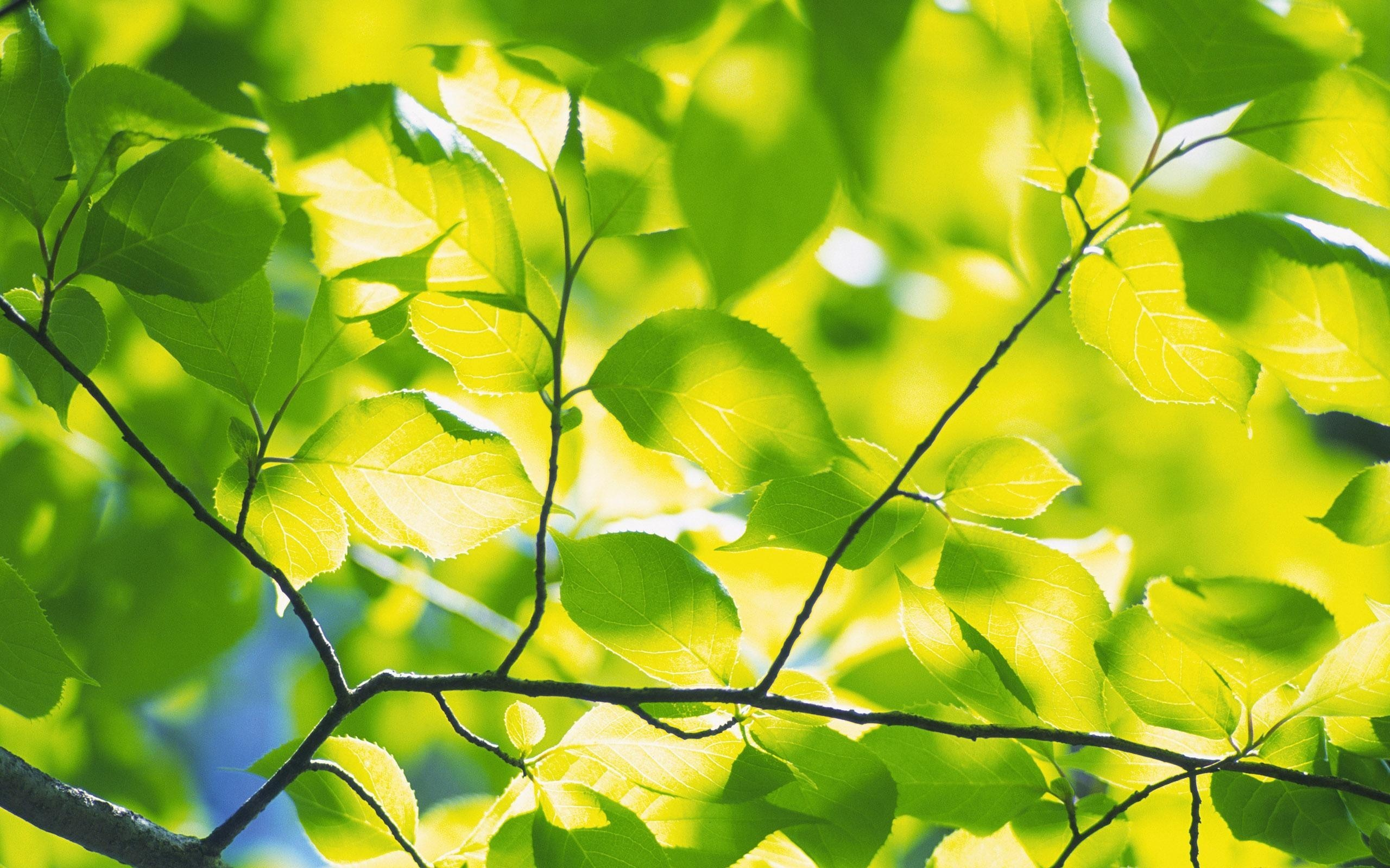 Birch Tree Fall Wallpaper Close Up Wallpaper With Tree Branches 51 Images