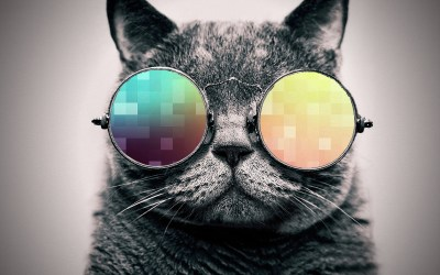 Cool Cat HD Wallpaper (66+ images)
