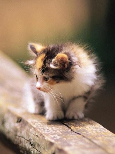Kitten Wallpapers (68+ images)