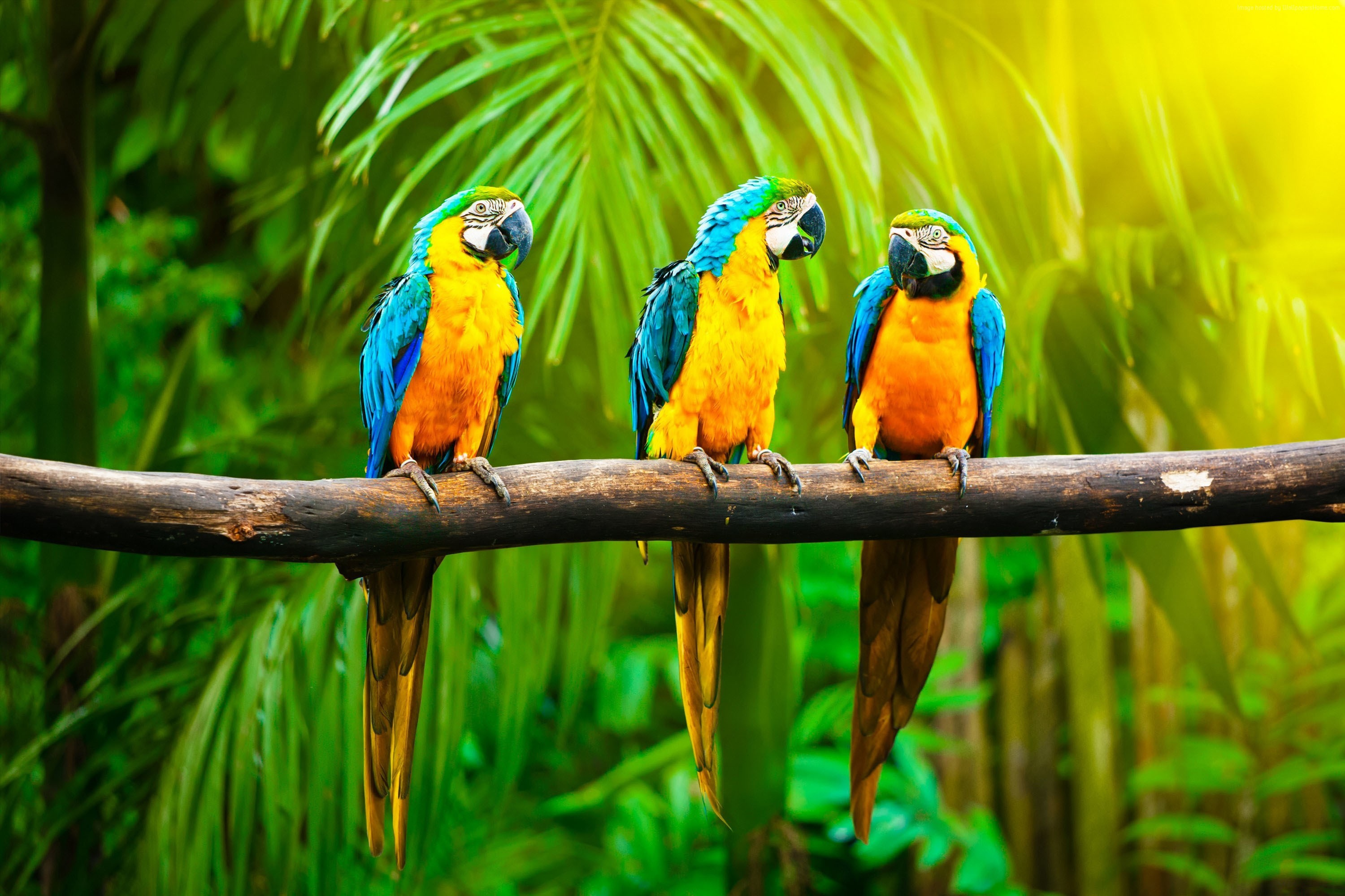 Parot Wallpapers Macaw Parrot Wallpaper 67 Images