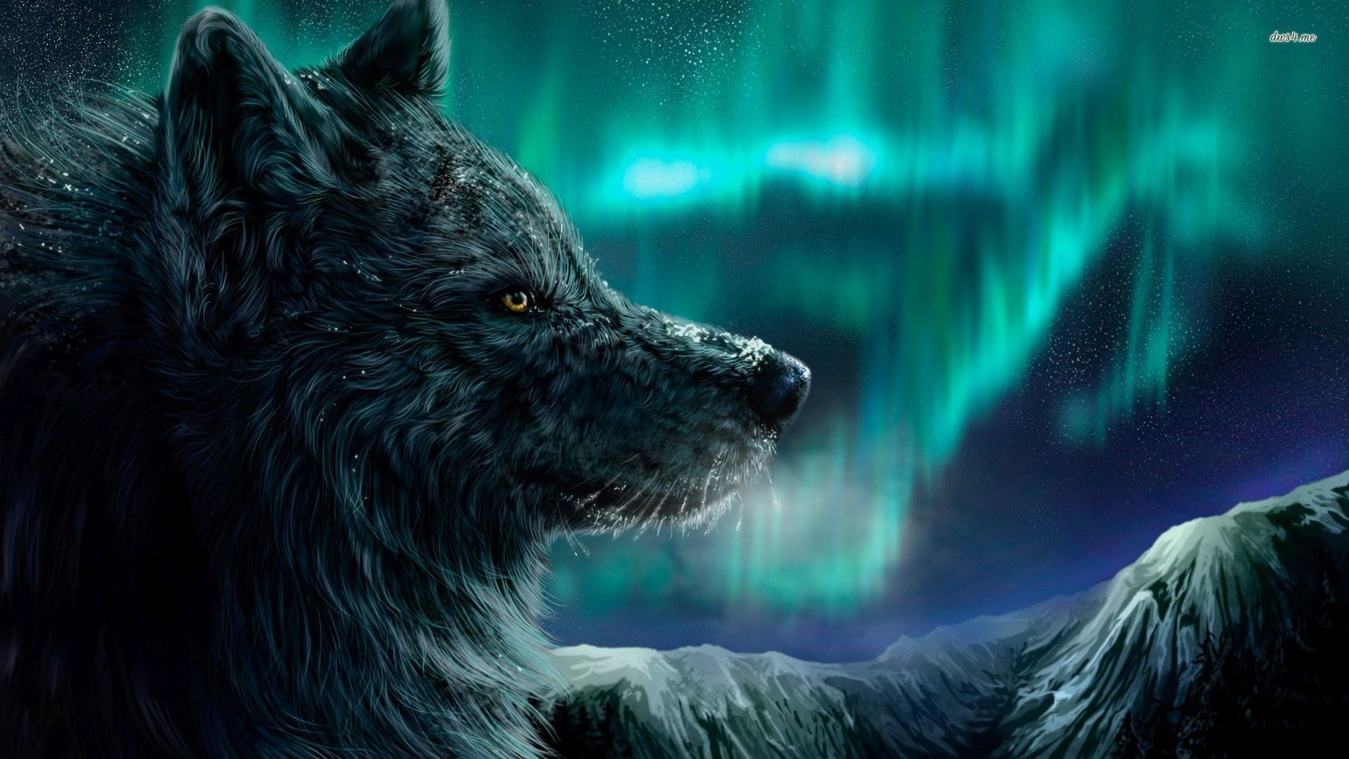Coole Wolf Bilder Cool Wolf Backgrounds 58 43 Images
