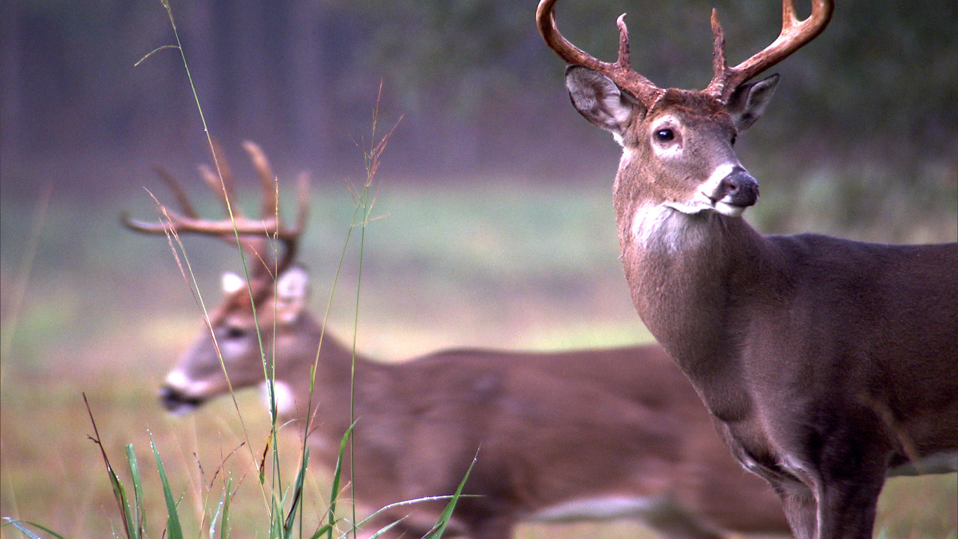 Country Girl Wallpapers With Camo Monster Bucks Wallpaper 46 Images