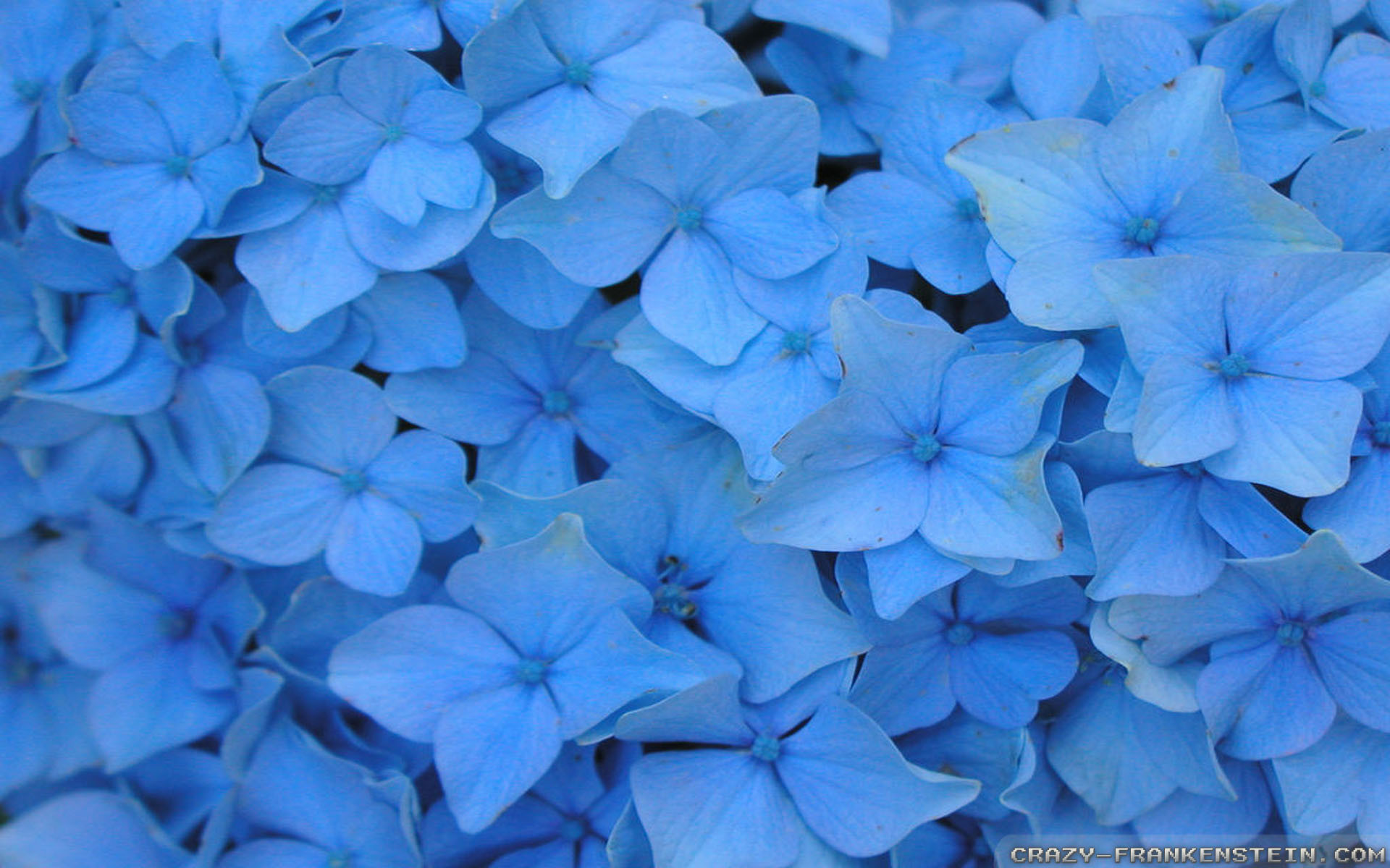 Free Download Most Beautiful Girl Wallpaper Blue Flower Wallpaper 61 Images