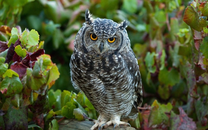 Cute Baby Owl Wallpaper 57 Images