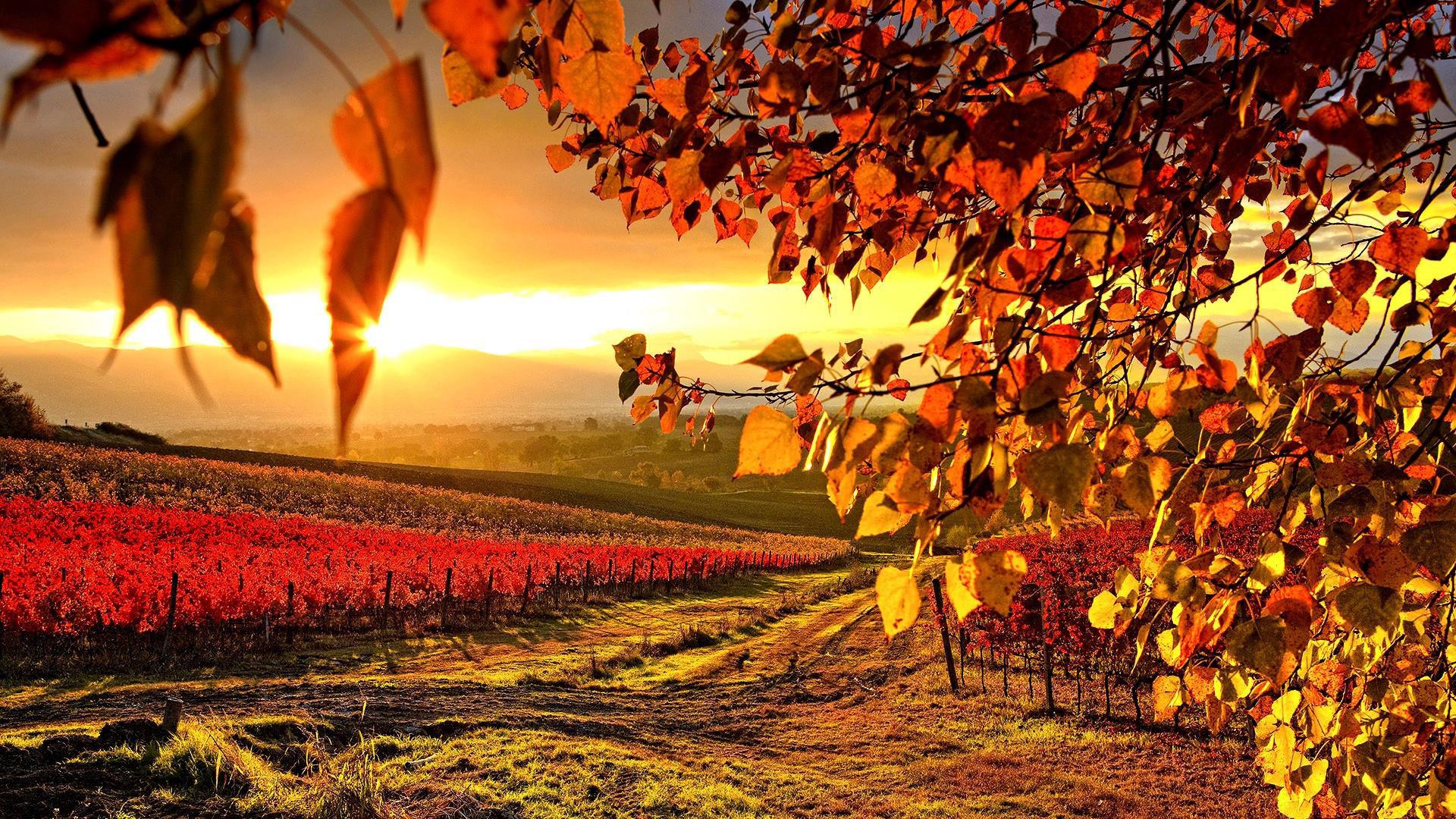 Free Download 3d Wallpapers For Windows 7 Desktop Nature Desktop Background 74 Images