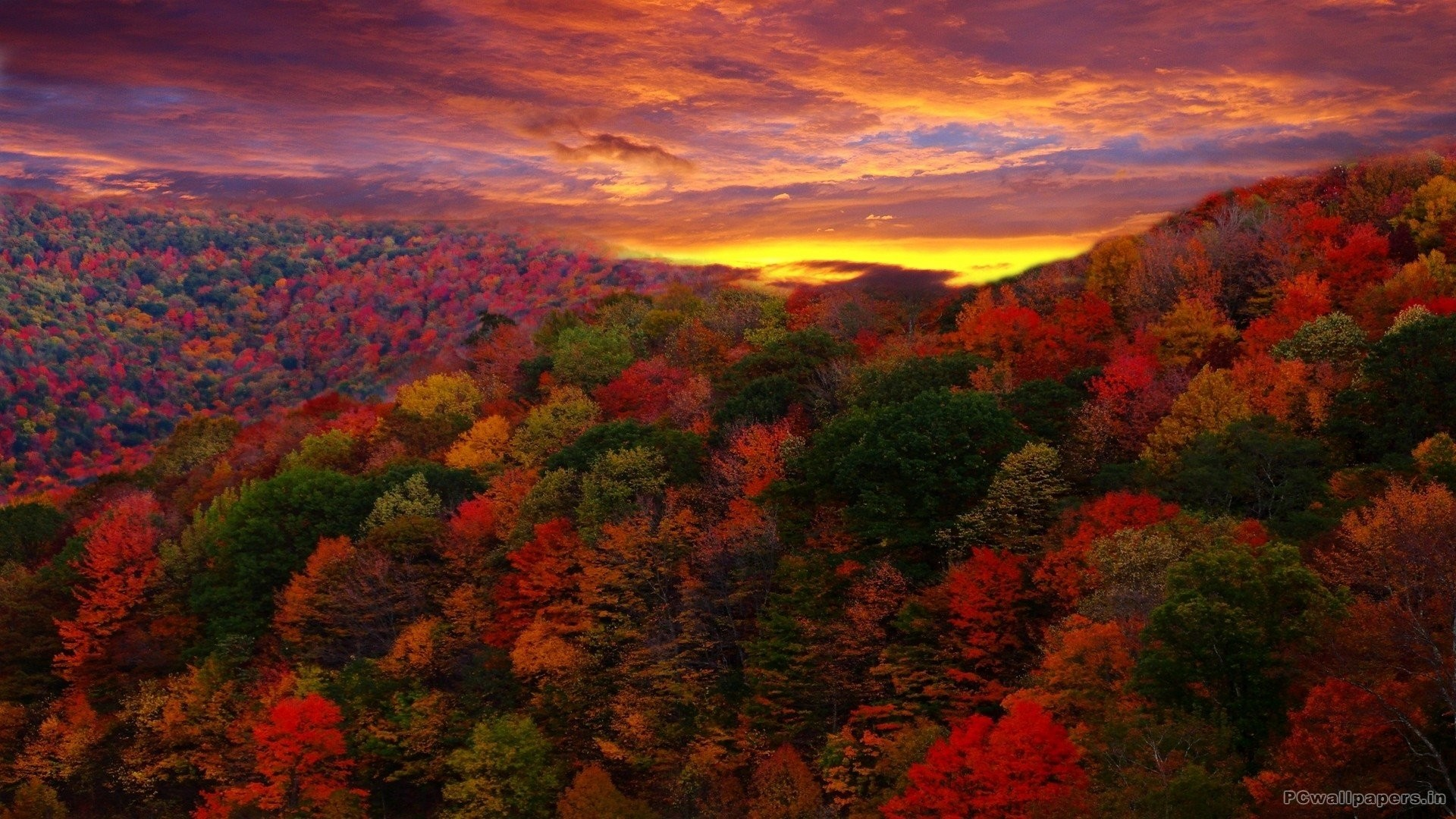 Fall Owl Wallpapers Hd Fall Colours Wallpapers 48 Images
