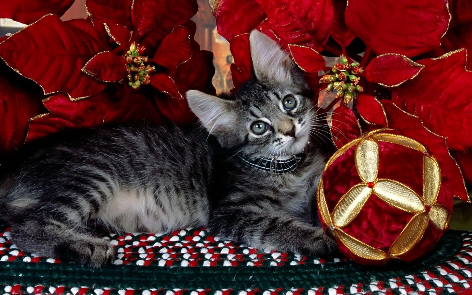 Cute Christmas Kitten Wallpaper Funny Cat Christmas Wallpaper 55 Images