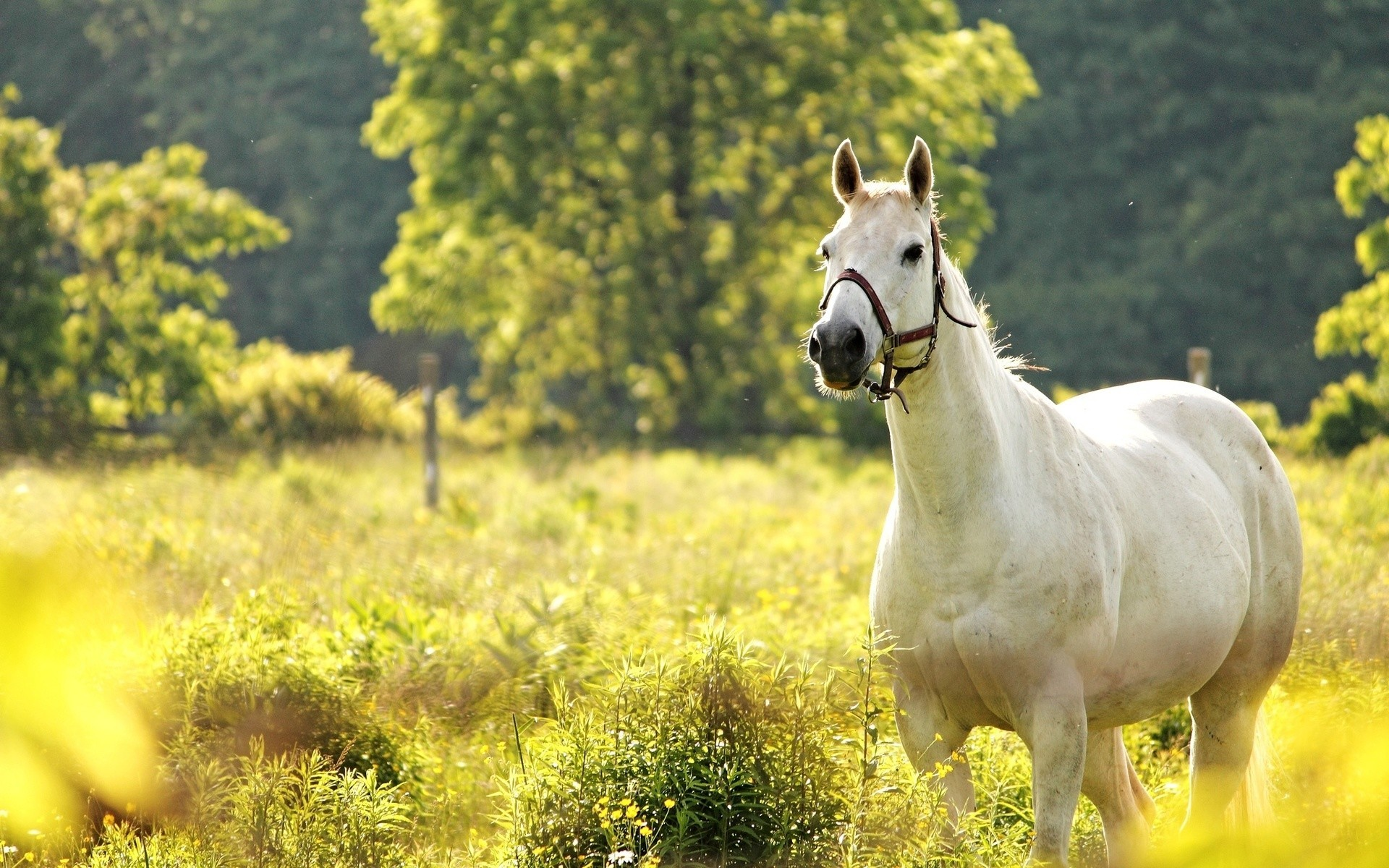 Smart Girl Wallpaper Free Download Cool Horse Backgrounds 57 Images
