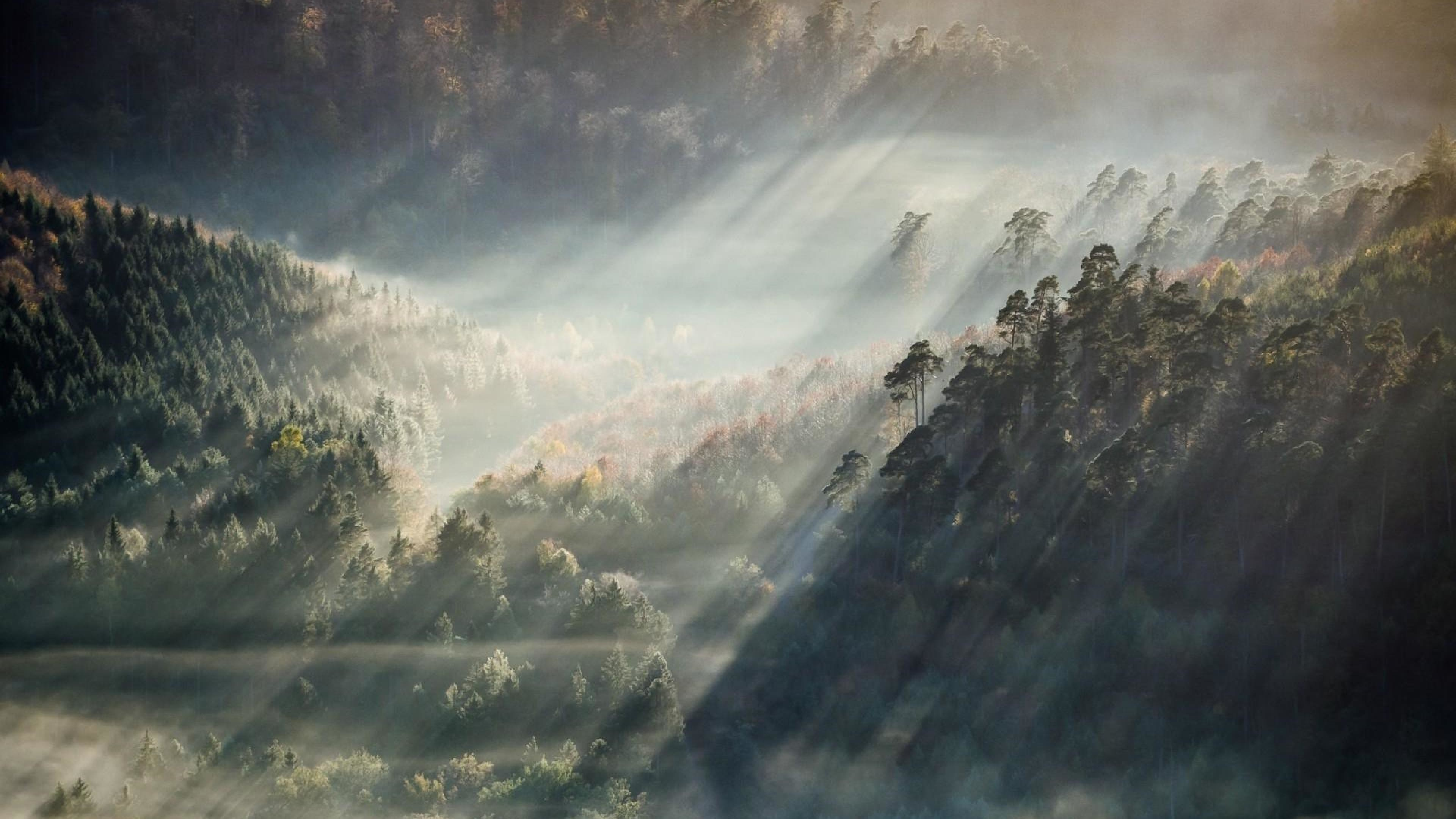 Fall Watch Wallpapers Foggy Forest Wallpaper 74 Images