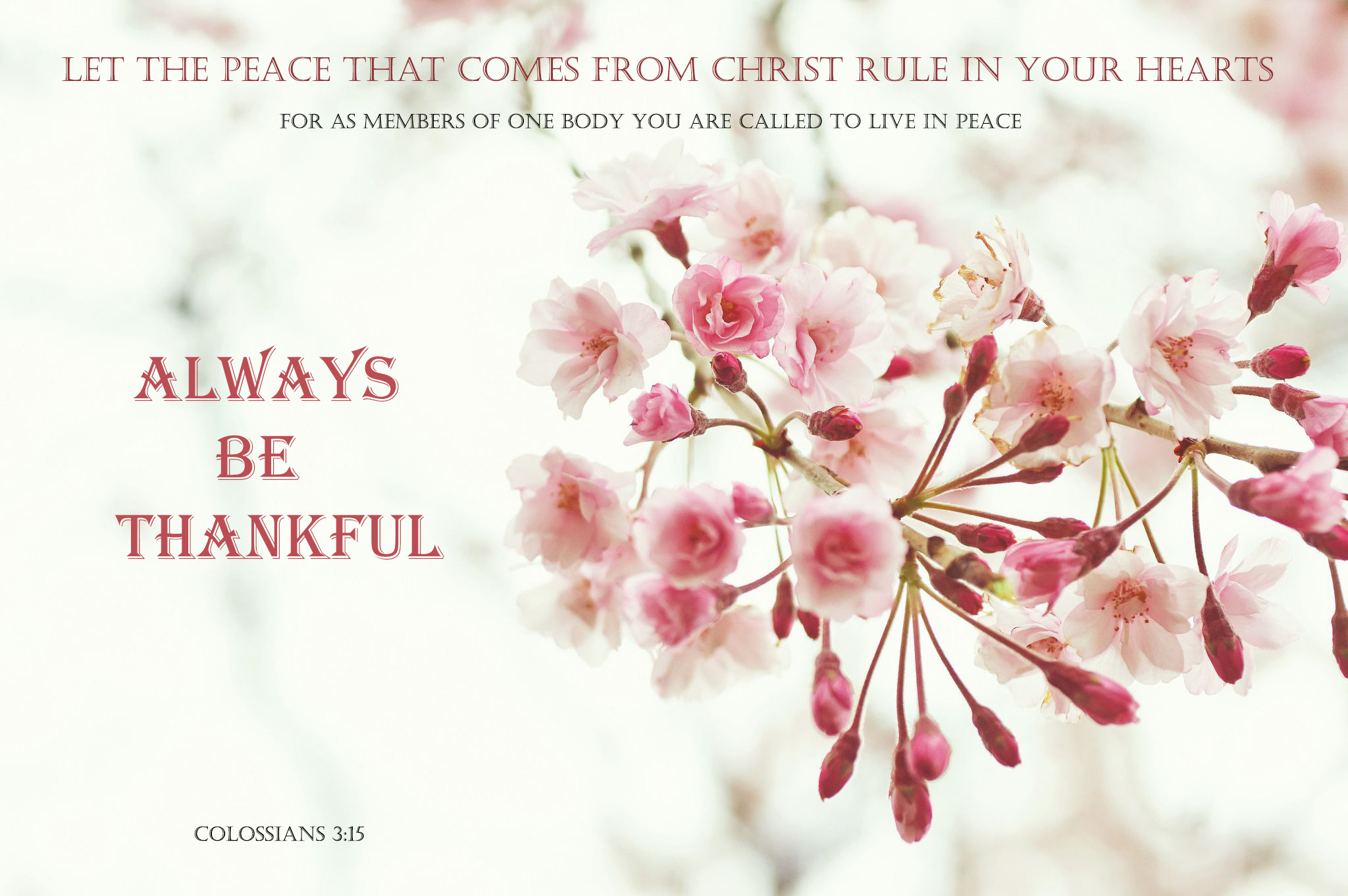 Pink Flower Wallpapers With Quotes Spring Christian Wallpaper 48 Images