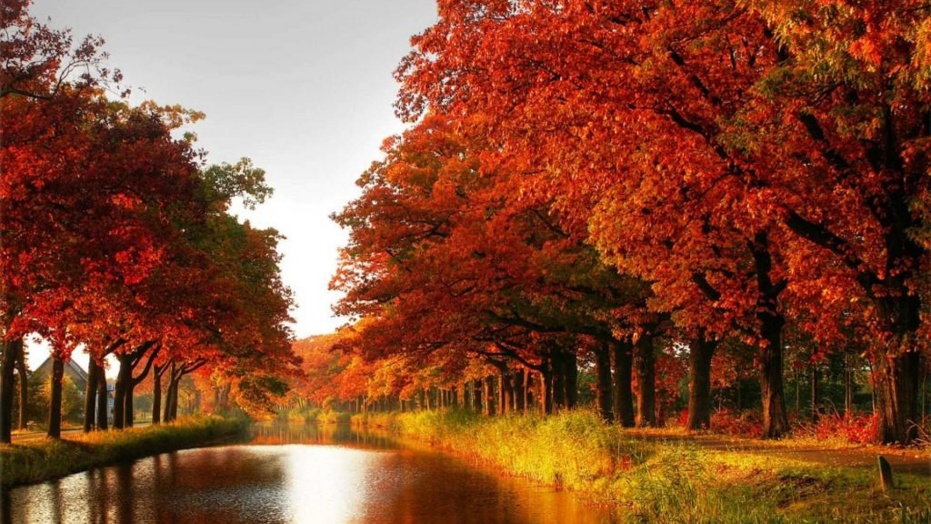 Fall Foliage Wallpaper For Iphone Autumn Tree Wallpaper 61 Images