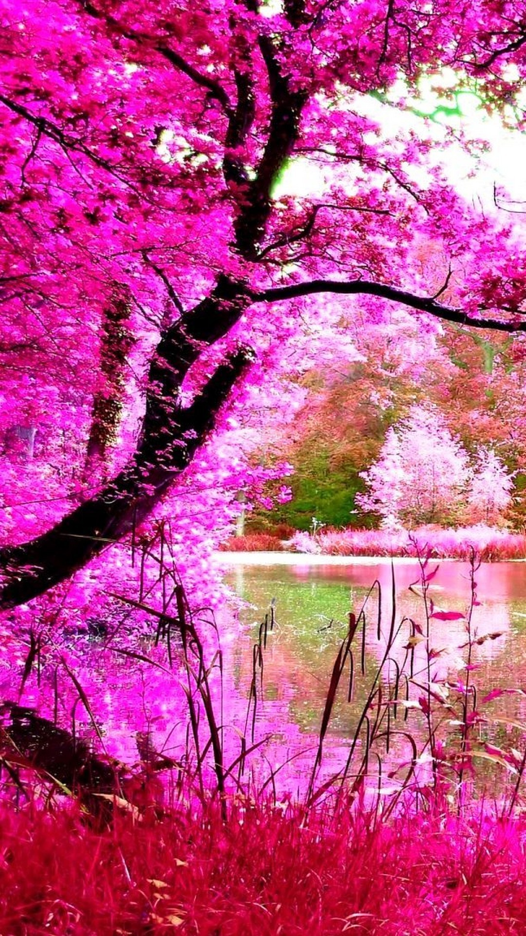 Fall Flowers Wallpaper Desktop Pink Nature Wallpaper 53 Images