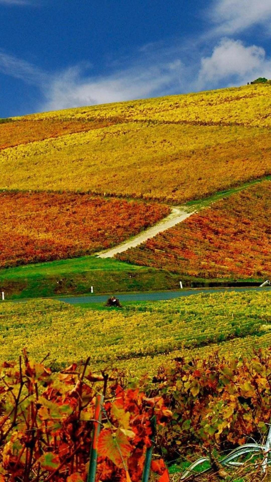 Autumn Leaves 3d Live Wallpaper Autumn Landscape Wallpaper 69 Images