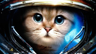 Space Cats HD Wallpaper (78+ images)