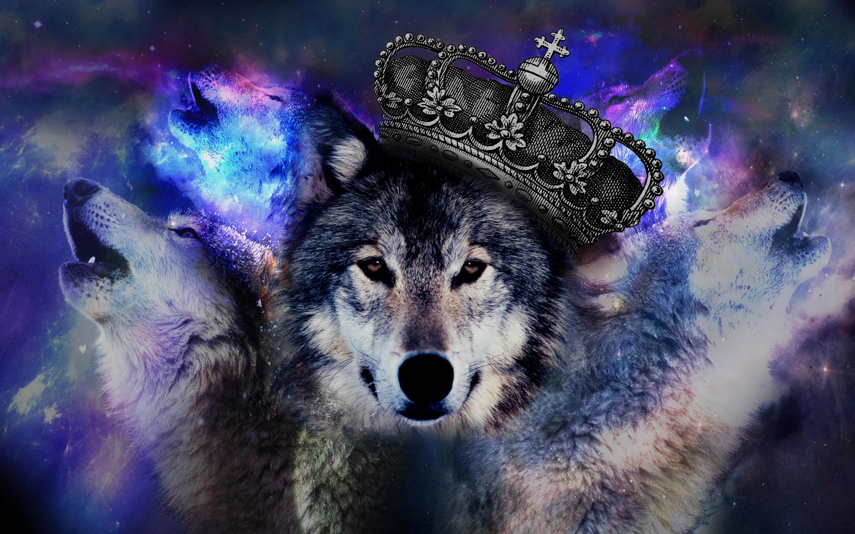 Coole Wolf Bilder Cool Wolf Wallpaper 61 43 Images