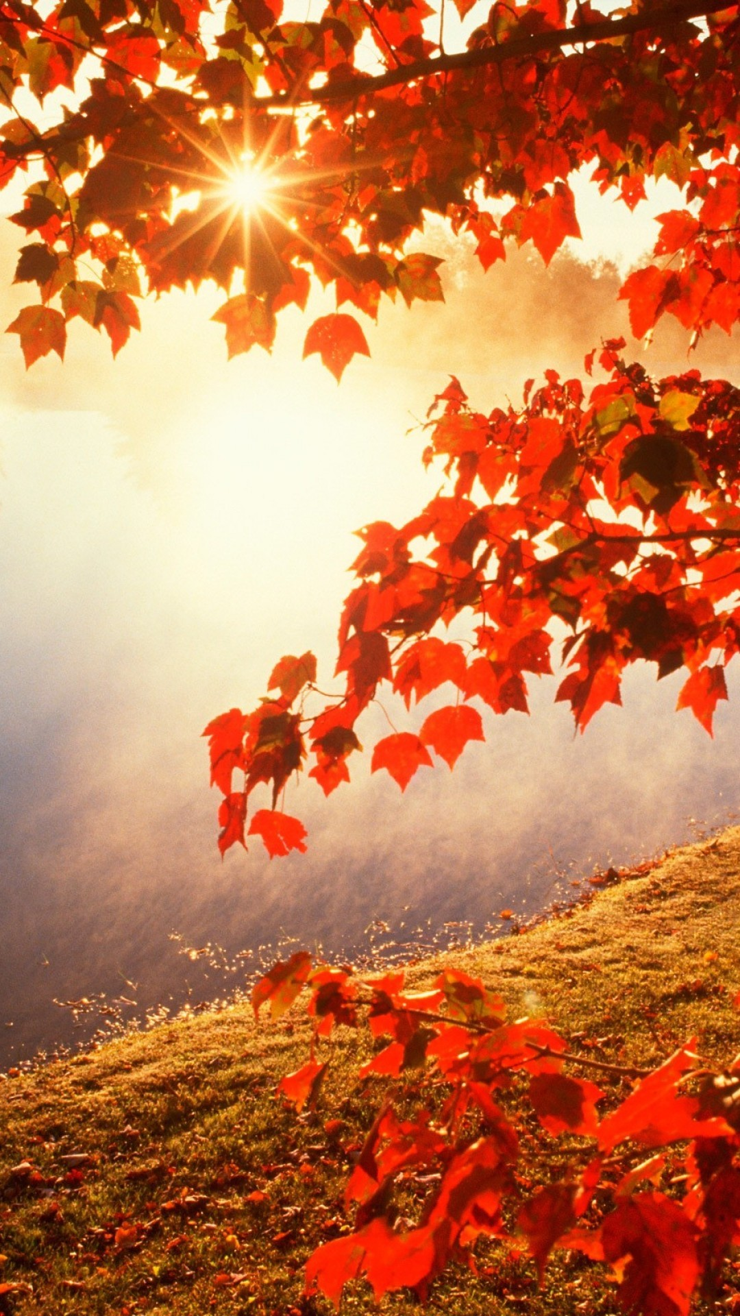 Fall Leaf Wallpaper For Mobile Iphone 6 Autumn Wallpaper 87 Images