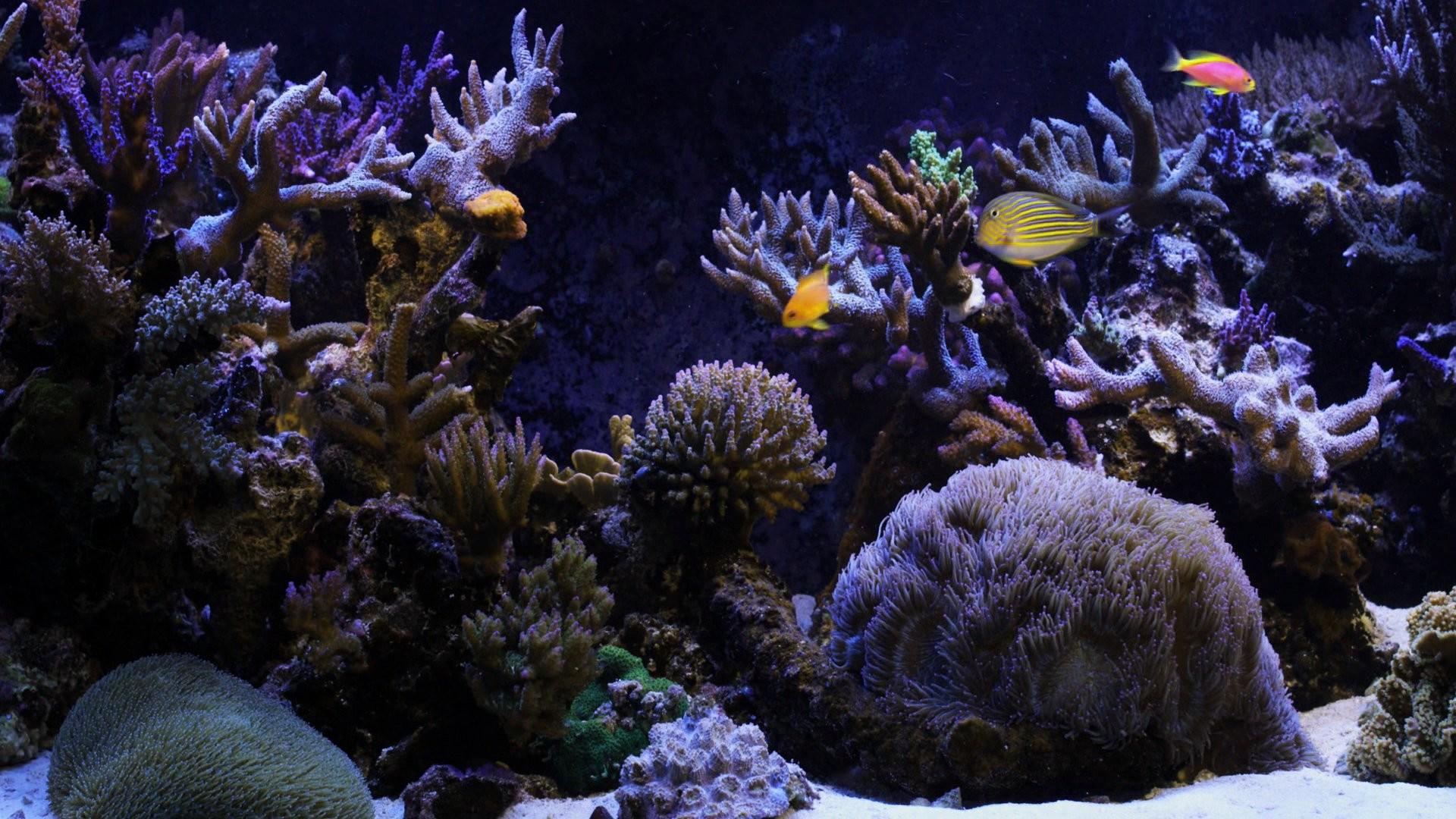 Watery Desktop 3d Live Wallpaper And Screensaver Aquarium Live Wallpaper For Pc 55 Images