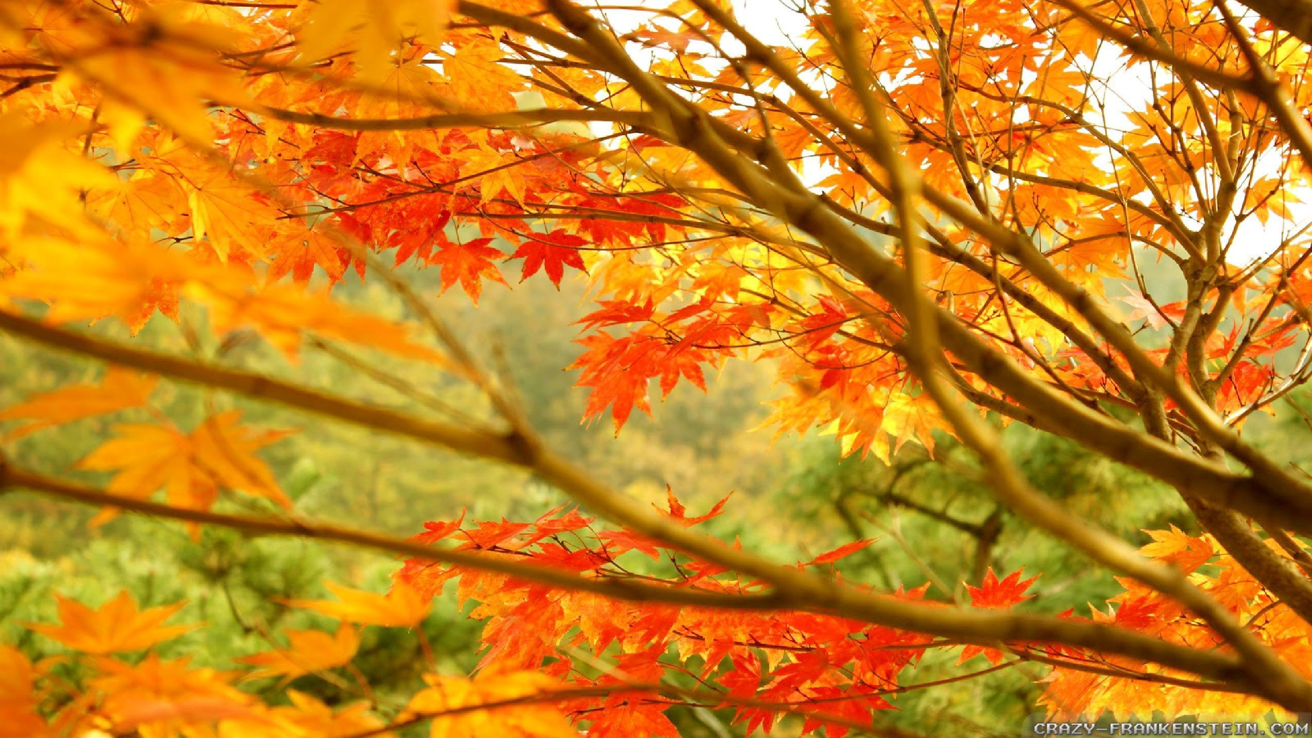 Autumn Tree Leaf Fall Animated Wallpaper Autumn Scenery Wallpaper 57 Images