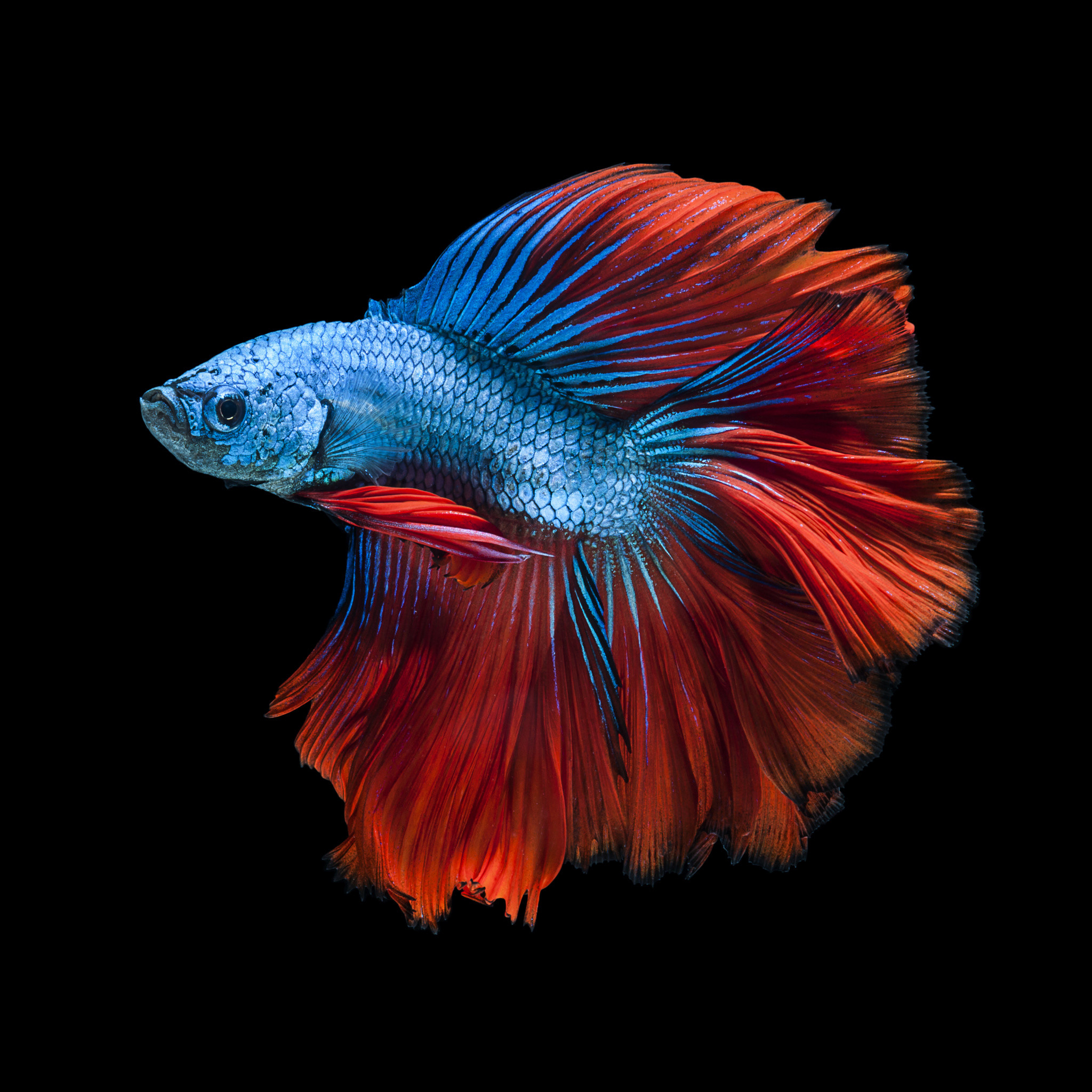 Moving Wallpapers For Iphone 6s Iphone 6s Fish Wallpapers 75 Images