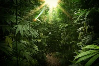 Marijuana Wallpaper (44+ images)