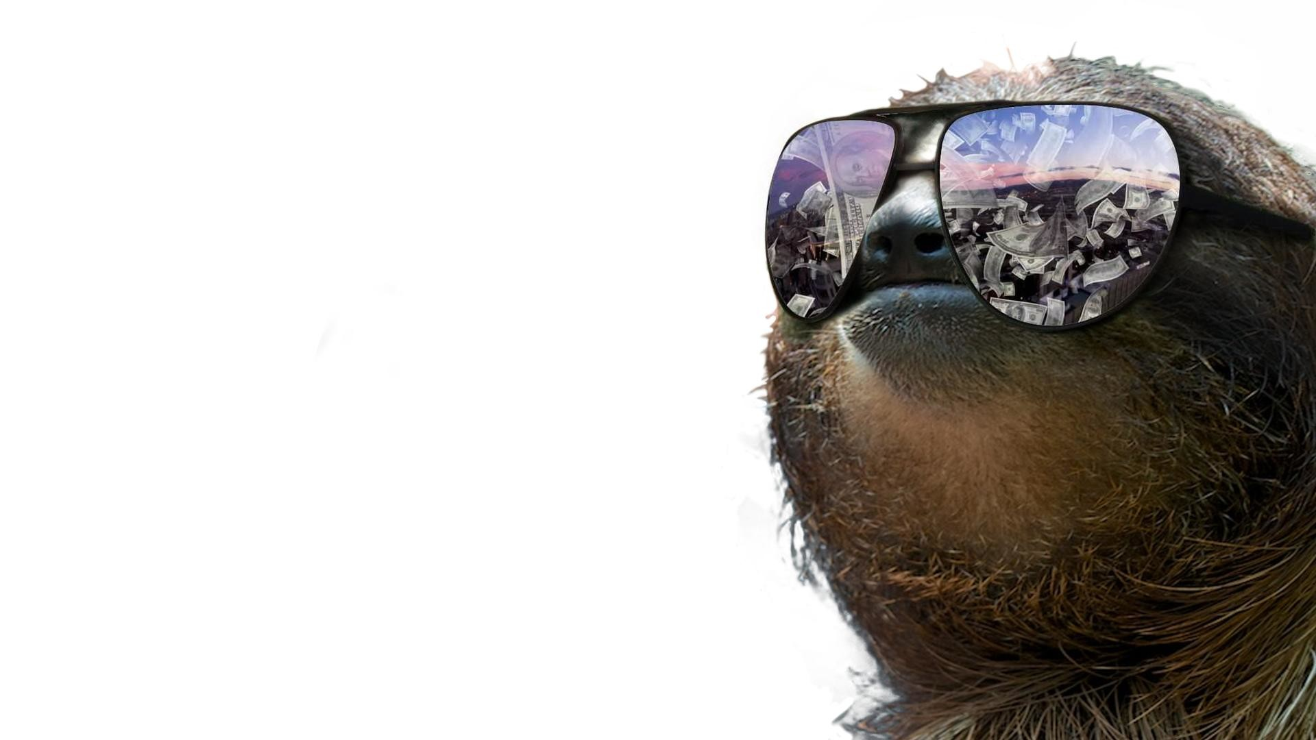 Cosmic Girls Wallpaper Funny Sloth Wallpapers 73 Images