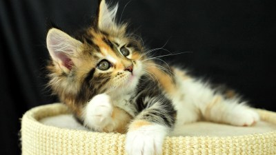 Cute Kitten Background (59+ images)