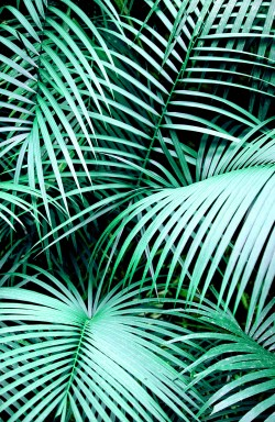... Small Of Palm Leaf Wallpaper ...
