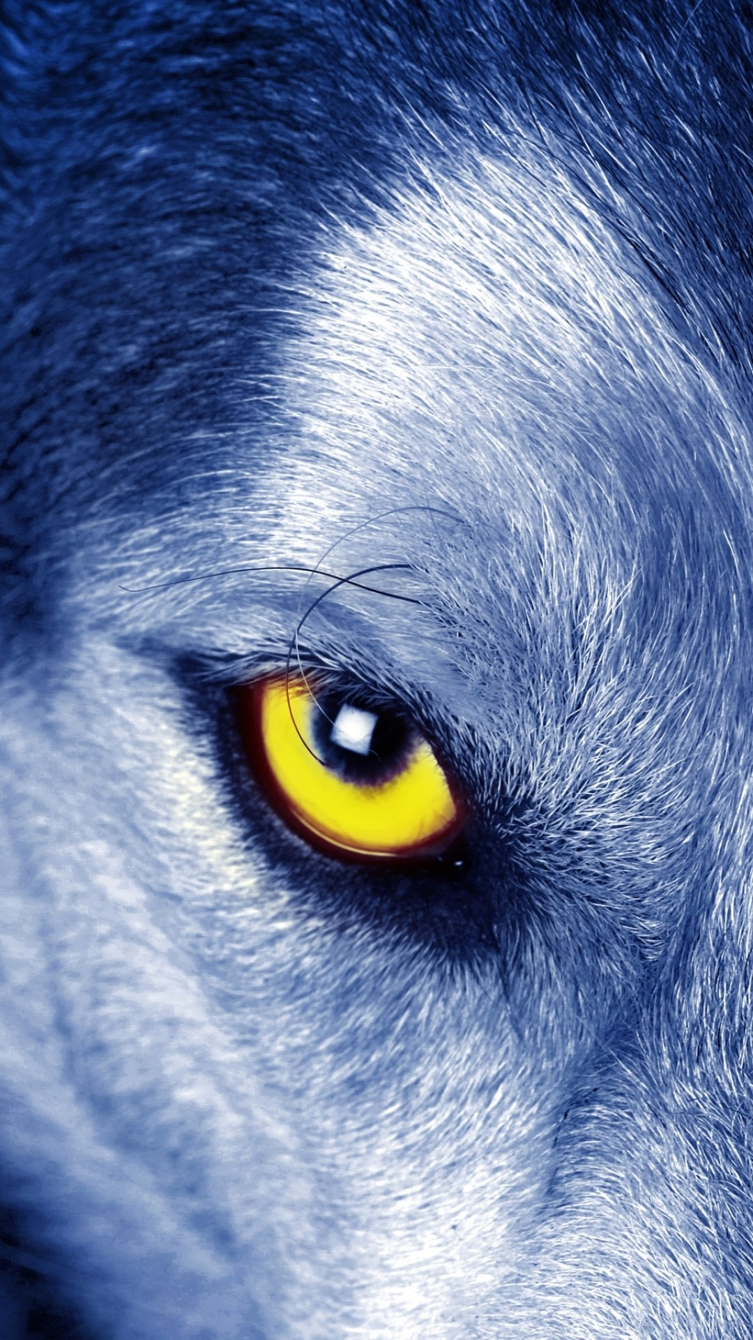Iphone Plus Wallpaper Wolf Wallpaper For Iphone 72 Images