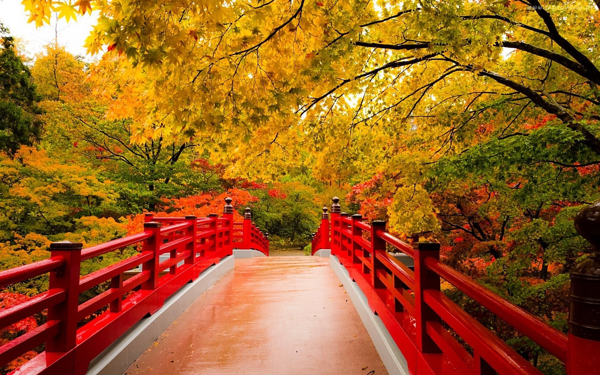 Fall Colored Background Wallpaper Abstract Fall Wallpaper 55 Images